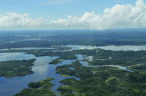 Amazon rainforest will one day become a savannah thanks to