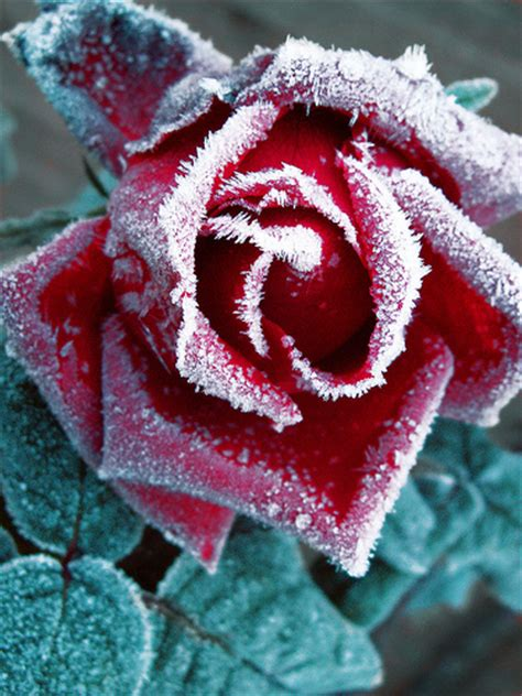 30 Fantastic Frost Pictures