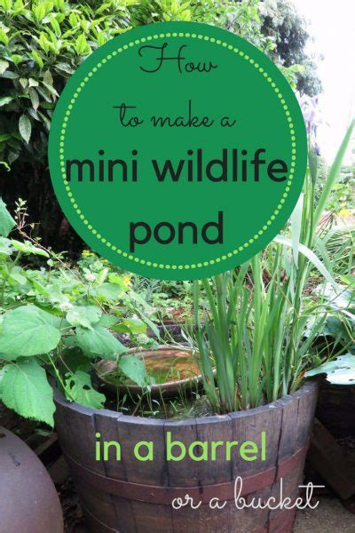 How to make a mini wildlife pond - The Middle-Sized Garden